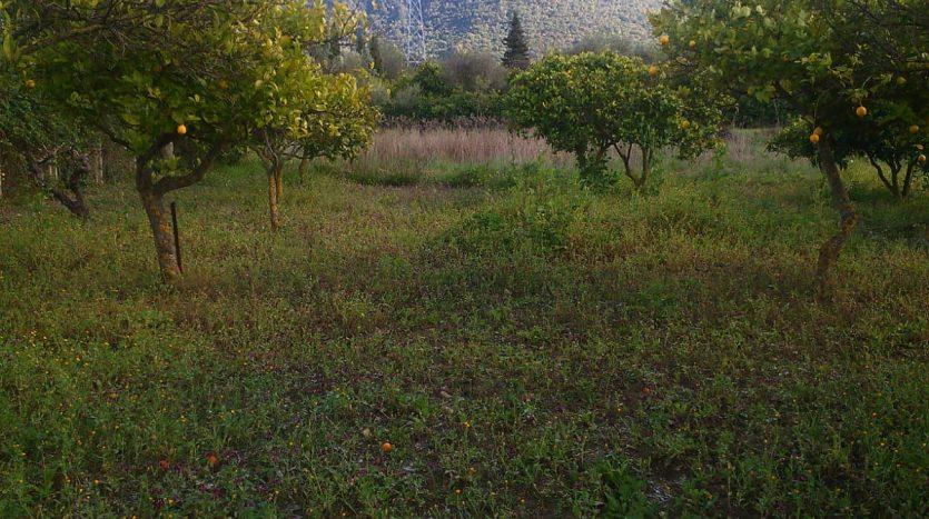 Finca en El Bosque, LA ZARZA